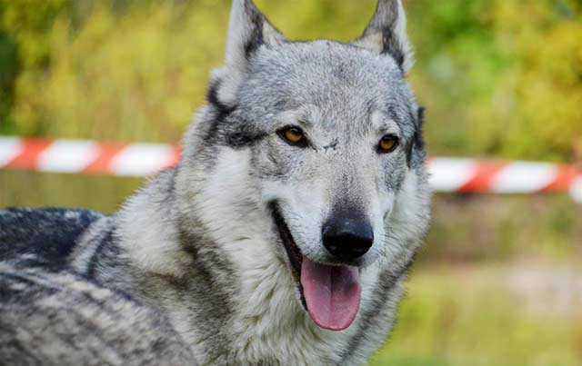 most-dangerous-dogs-in-the-world