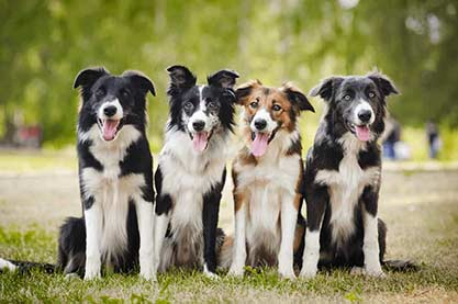 Rarest Dog Breeds In The World