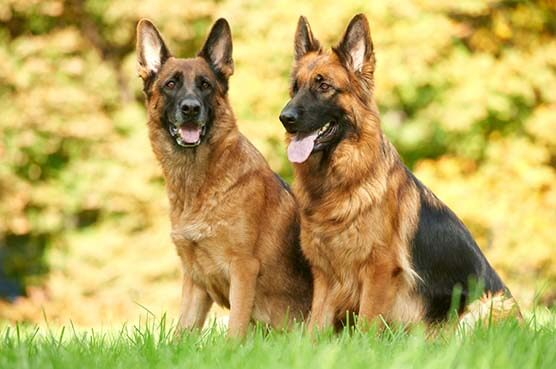 10-MOST-POPULAR-DOG-BREEDS