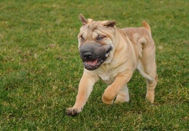 Understanding-Dog-Body-Language