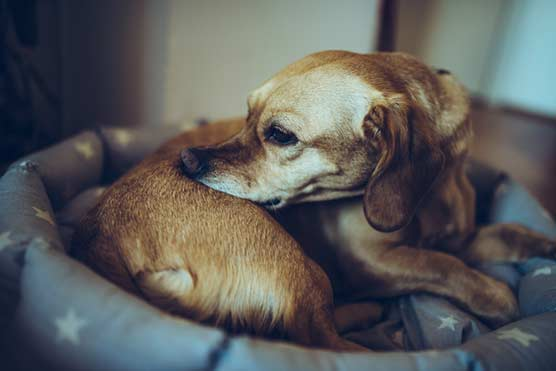DIY-First-Aid-Kit-For-Your-Dog-First-Aid-For-Dogs
