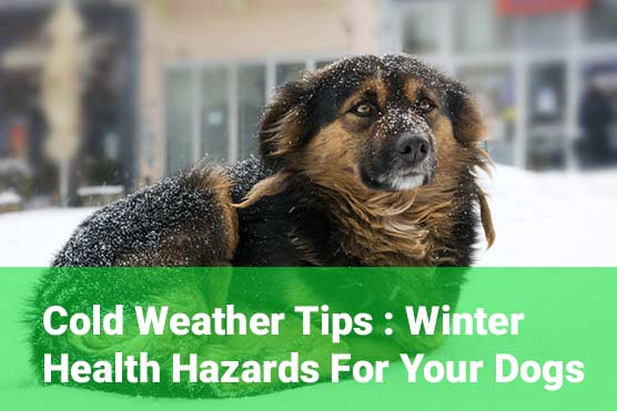 Winter-Health-Hazards-for-your-dogs
