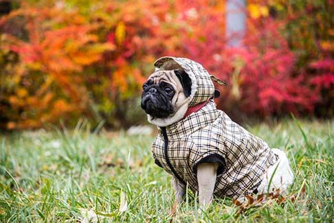 Dog-Summer-Cloth