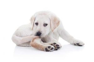 Dog's Tail Biting Behavior and How to Stop It