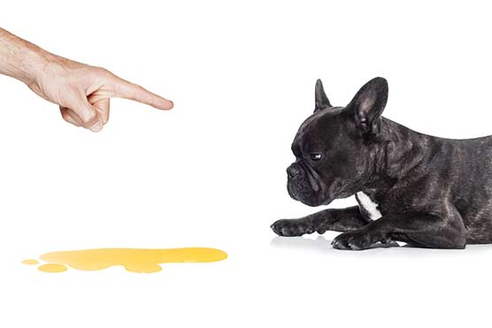 puppy-training-tips