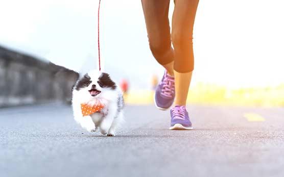 Nine-top-tips-to-help-keep-your-dog-healthy