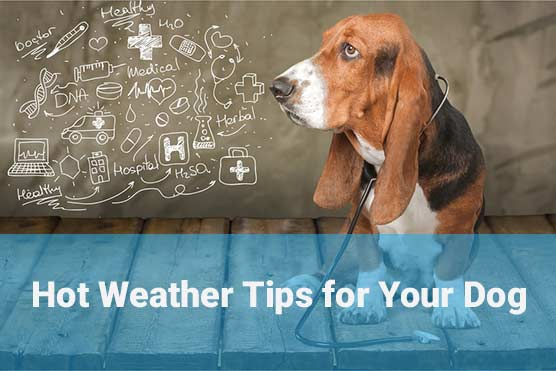 Hot-Weather-Tips-for-Your-Dog