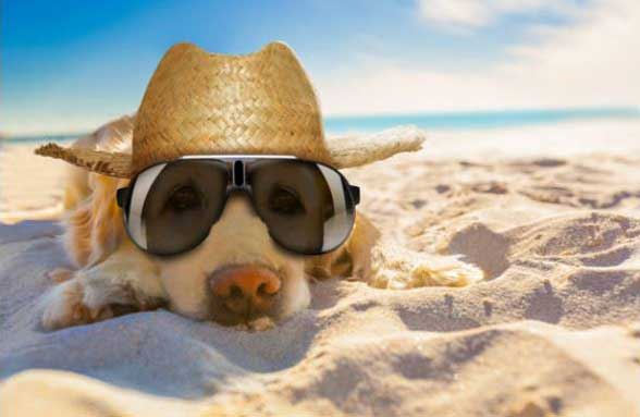 11 Tips for How to Keep a Dog Cool in Summer