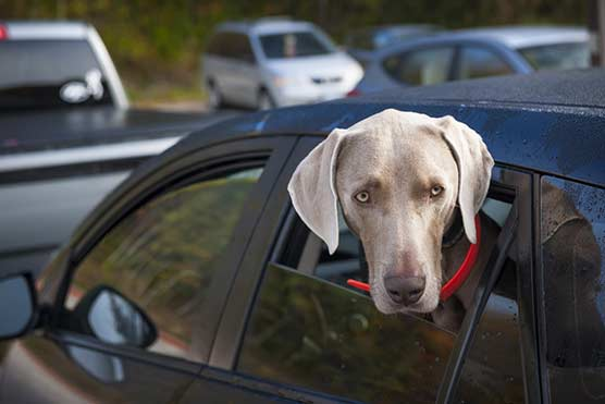 11-Tips-for-How-to-Keep-a-Dog-Cool-in-Summer-Prevent-Heatstroke