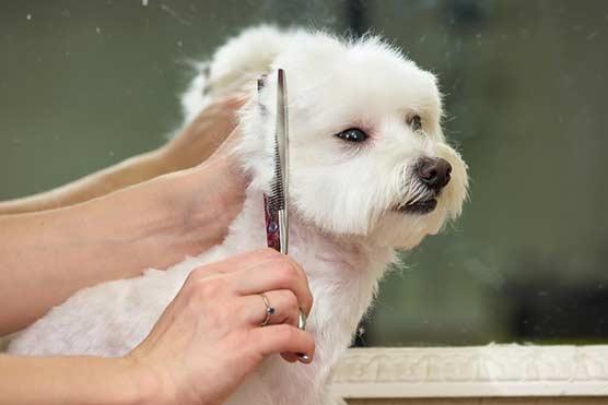 Nine top tips to help keep your dog healthy