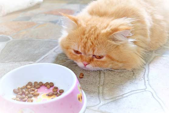 12-Signs-Your-Pet-is-Crying-for-Help