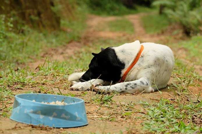 Puppy Is Not Eating | Causes and Advice
