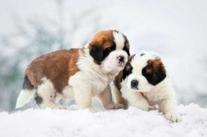 Cold Weather Tips : Winter Health Hazards For Your Dogs