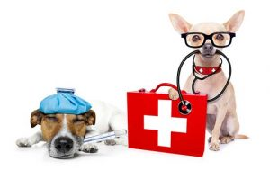 DIY Dog Care Kit and Bloat Kit | First Aid For Dogs
