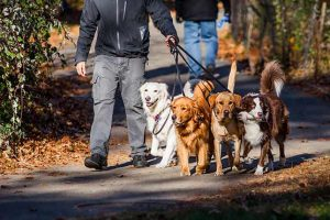 Learn Easily How to Start  Dog-walking Business