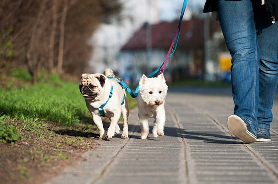 Learn-Easily-How-to-Start-Dog-walking-Business