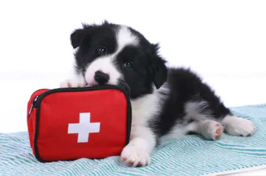 A comprehensive guide on first aid for dogs