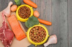 Ultimate-Essential-Nutrients-Your-Dog-Needs
