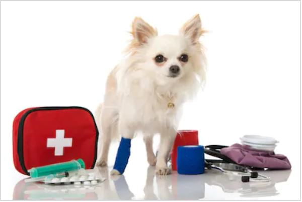 A-comprehensive-guide-on-first-aid-for-dogs