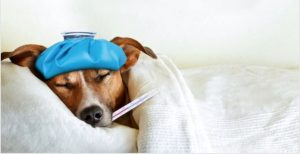 Frequent-Canine-Sicknesses