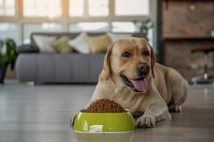 The Best Large Breed Puppy Foods